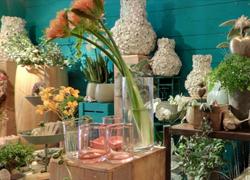 Blume sucht Vase